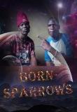 Born sparrows